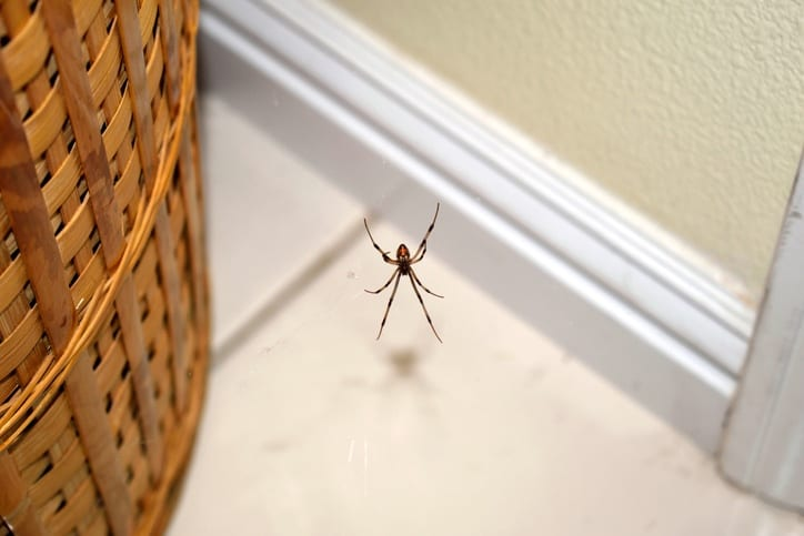 spider-control-laurinburg-rockingham-nc